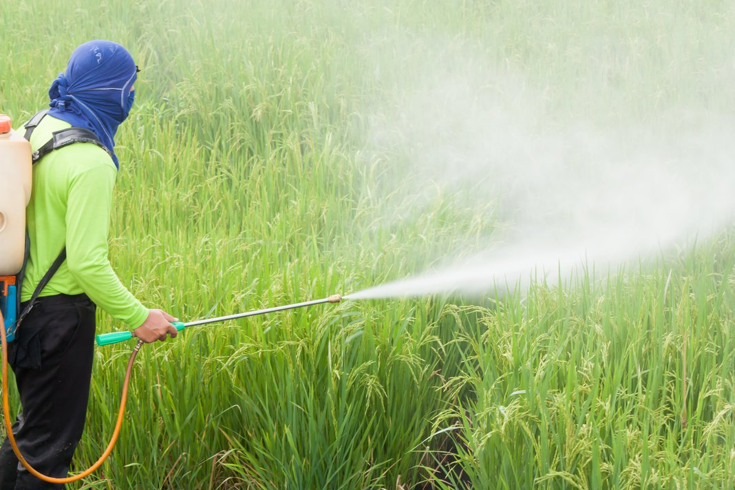 Spraying Pesticides